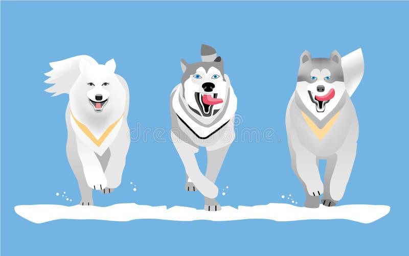 Laufen mit Hunden flach Hunderasse Schlittenhund und Malamute lizenzfreie abbildung