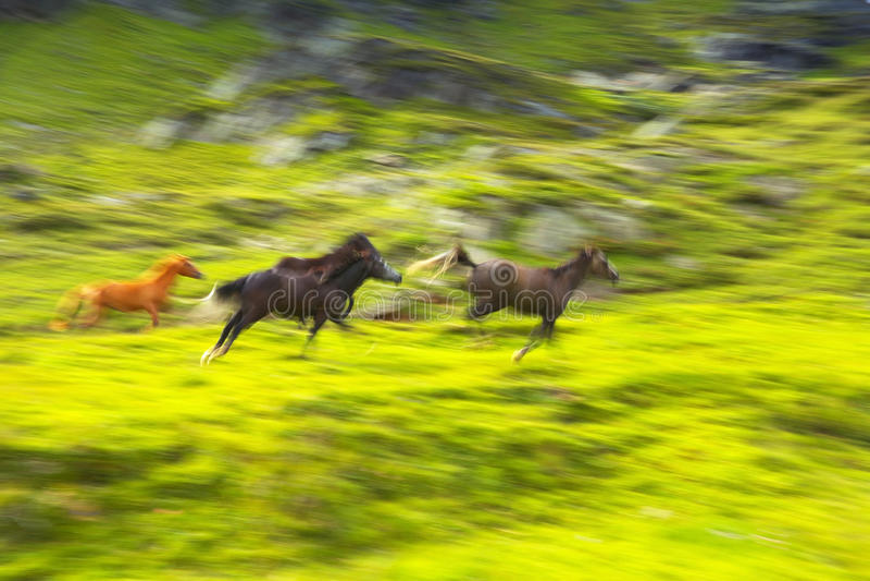 Laufende Pferde stockfotos