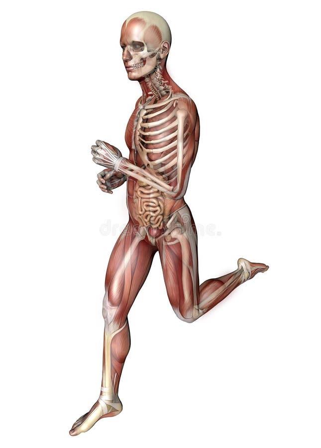 Ungewöhnlich Verdauungssystem Anatomie Bilder - Menschliche Anatomie ...