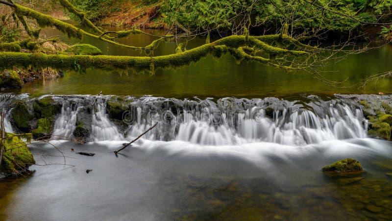 Laufender Weaver Creek in Fraser Valley, Britisch-Columbia, Kanada stockbild