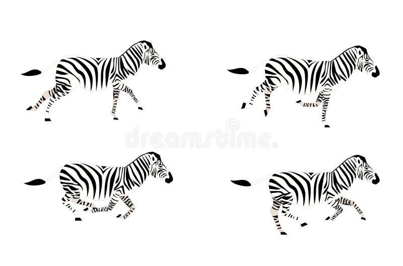 Laufender Zebra lizenzfreie abbildung