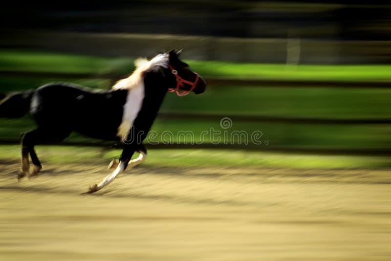 Laufendes Pferd lizenzfreie stockbilder