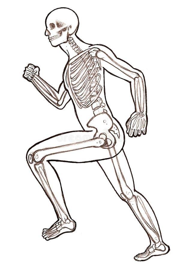 Laufendes Strahl-Skelett des Mann-X vektor abbildung
