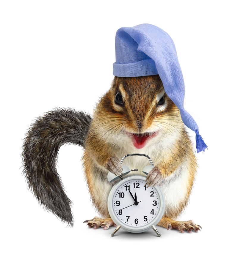 Free Laughable Animal Chipmunk With Clock And Sleeping Hat Stock Image - 87502551