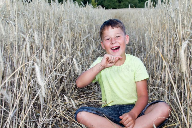 Boy in a cornfield royalty free stock photos