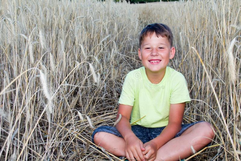 Boy in a cornfield stock images
