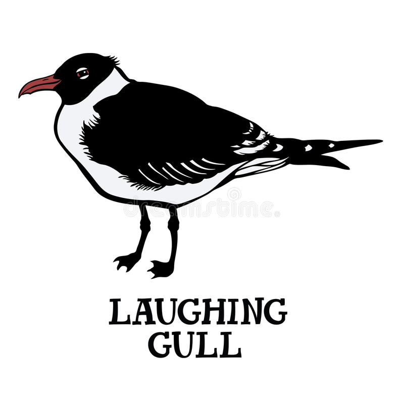 Laughing gull. Vector isolated object Cartoon drawing vector illustration