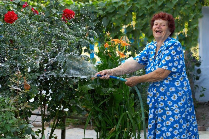 Laughing senior woman irrigating flower garden. Laughing senior woman in colorful dress irrigating flower garden stock photos