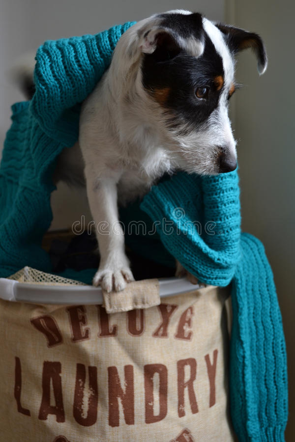 Laundry dog stock photo