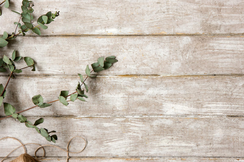 Laurel branch on wood background flat lay. Floristry workshop table with decor. Decorative artwork from spring flower stock image