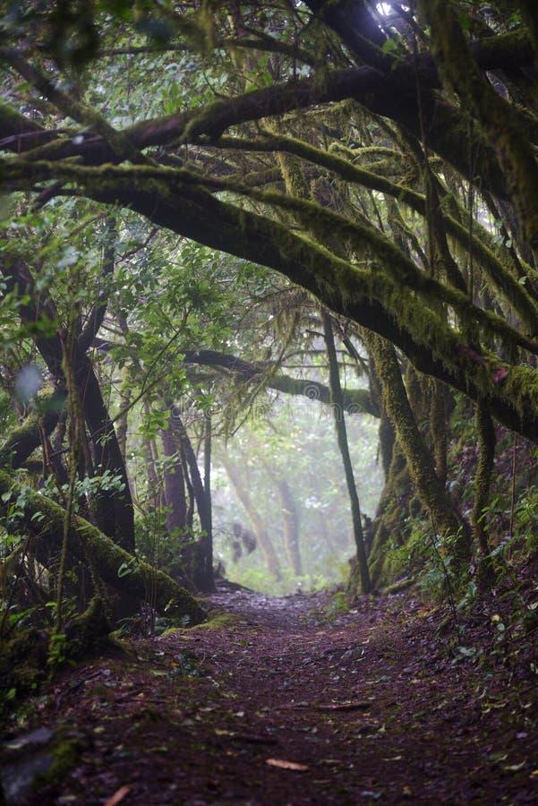 Laurel forest, La Gomera Spain royalty free stock image