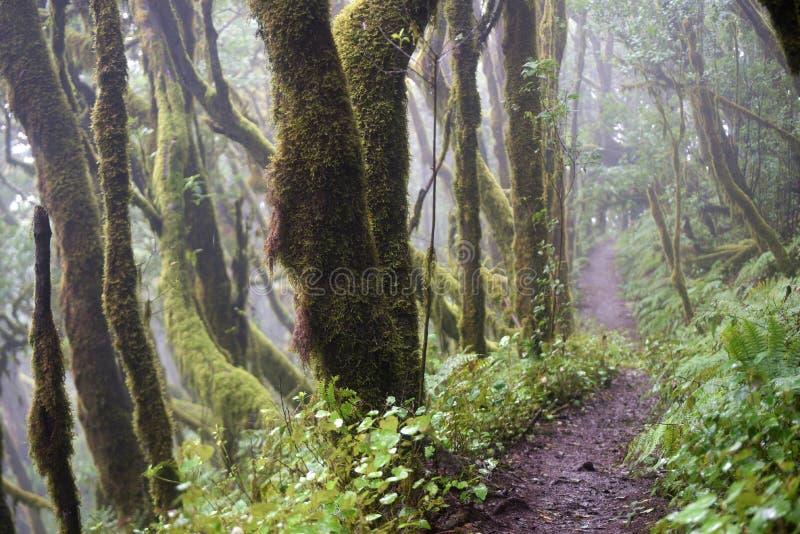 Laurel forest, La Gomera Spain stock images
