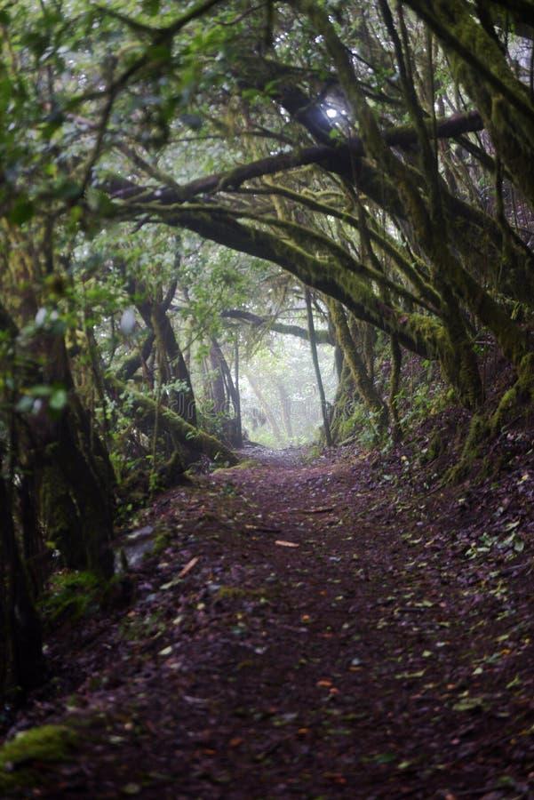 Laurel forest, La Gomera Spain stock photo