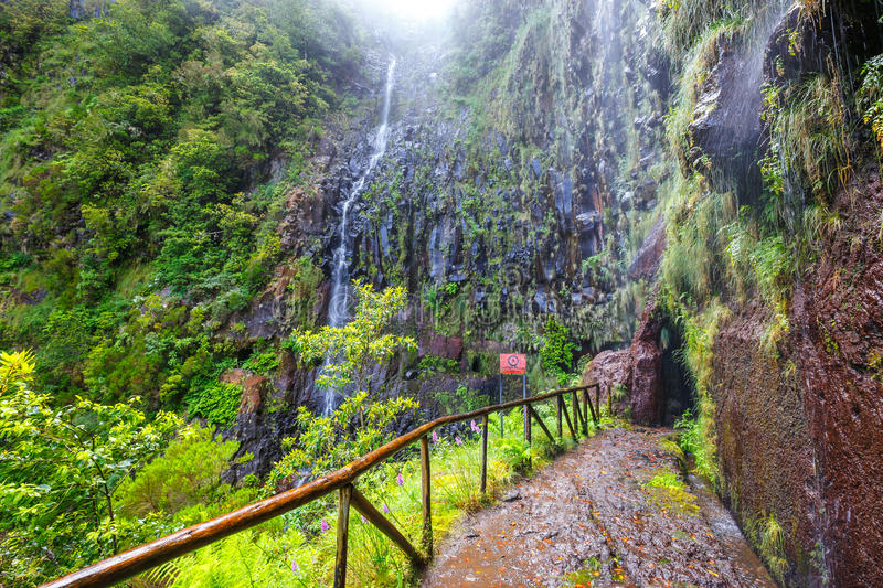 Laurel forest, Lewada das 25 fontes and Lewada do Risco , Madeira Island, Portugal royalty free stock images