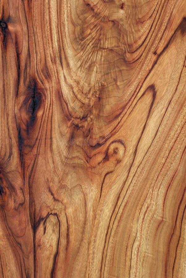laurel kamforowy tekstury drewna zdjęcia stock