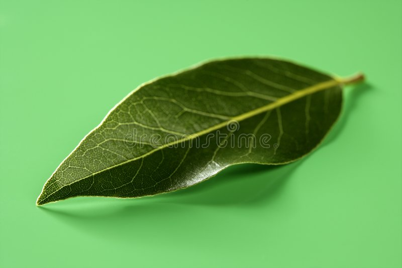 Download Laurel Leaf Over Green Studio Background Stock Image - Image: 7580407
