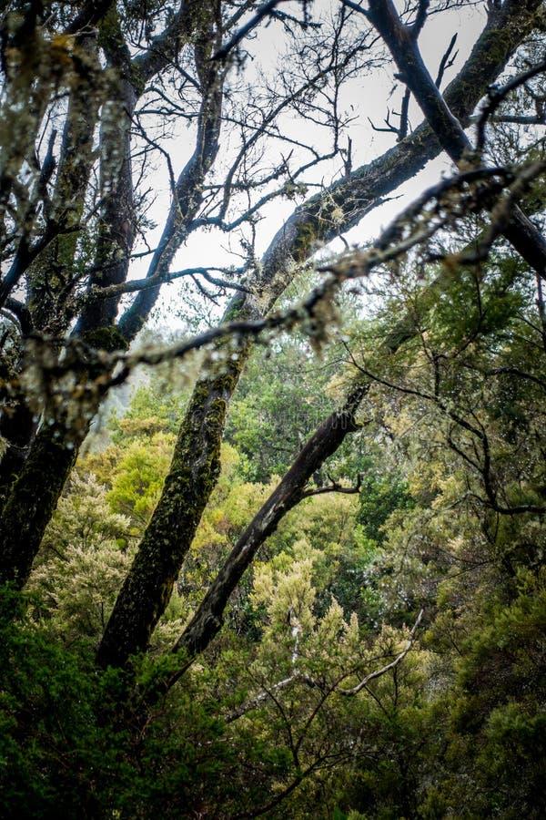 Laurel rain forest in La Gomera royalty free stock images