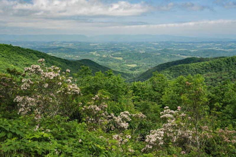 Laurier de montagne, Ridge Mountains bleu et vallée de Shenandoah - 3 photo stock