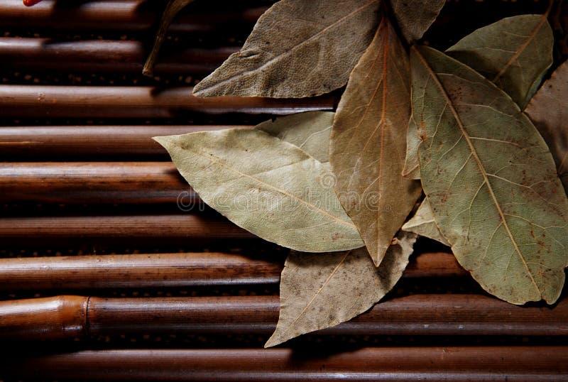 Laurierblad op bamboe royalty-vrije stock foto's