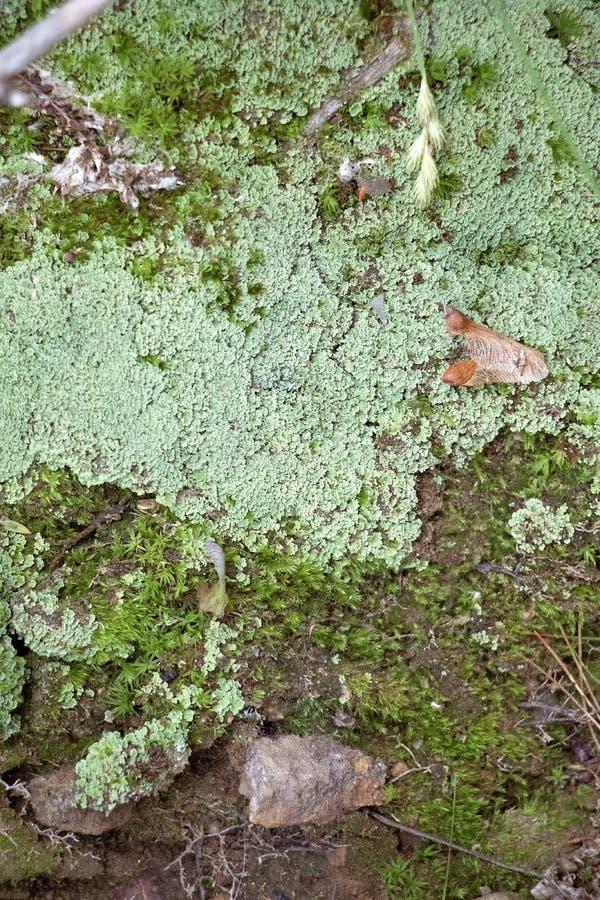 Lav- och Moss Summer Forest Floor Detailed sikt arkivbild