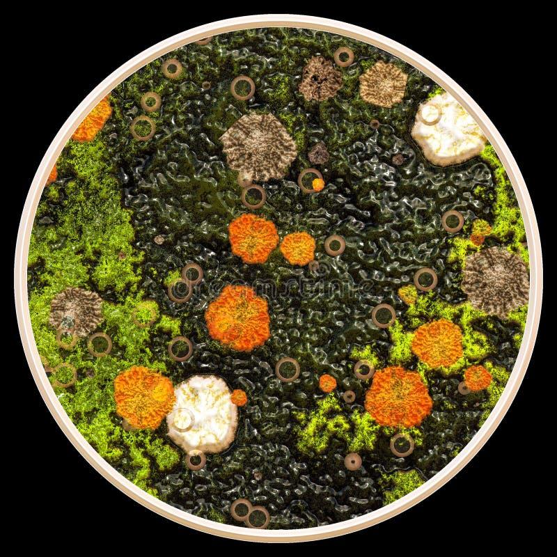 Lav och svampar under mikroskopet royaltyfri foto