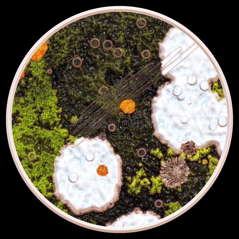 Lav och svampar under mikroskopet arkivfoton