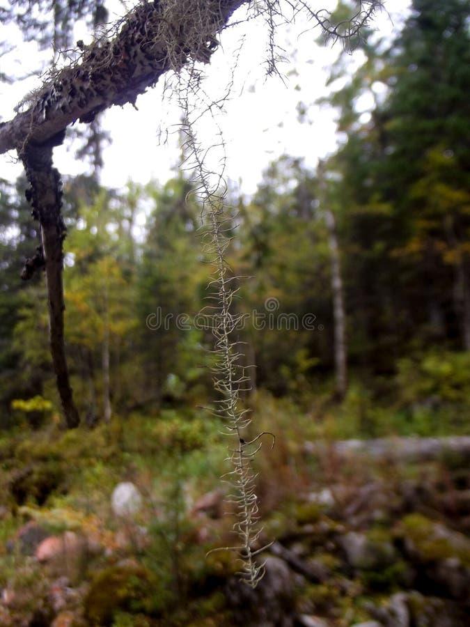 Lav på en trädfilial royaltyfri foto