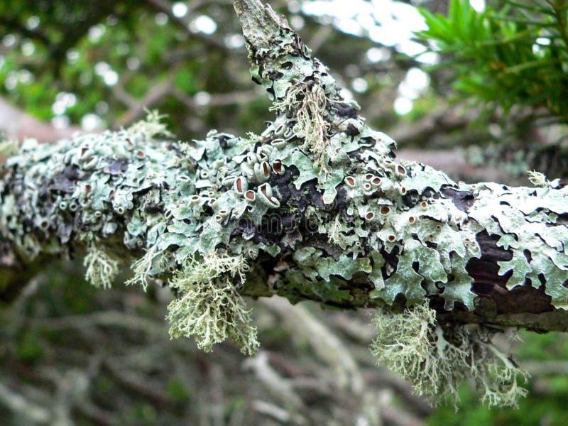 Lav på en trädfilial arkivfoton