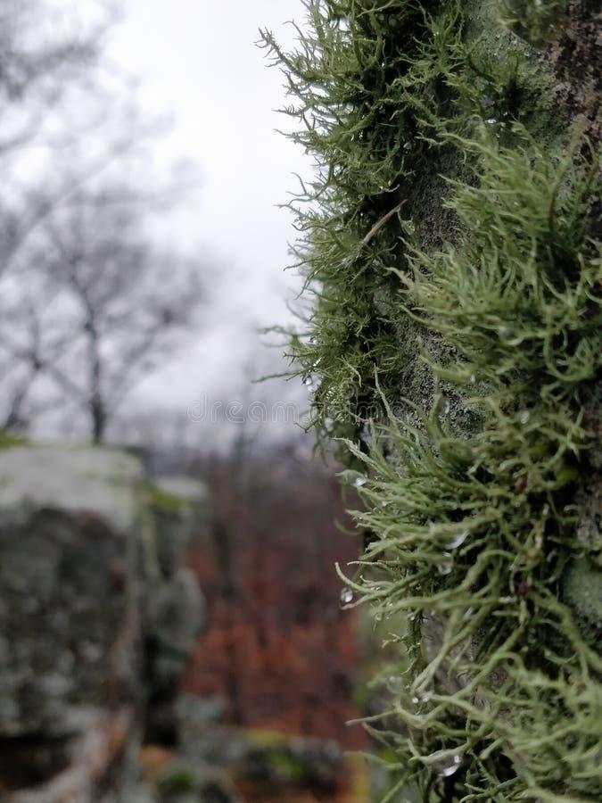 Lav på en tree fotografering för bildbyråer