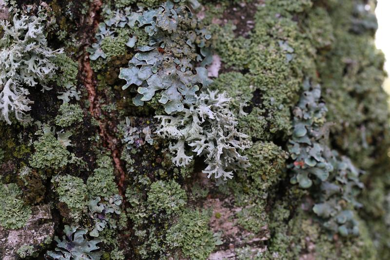 Lav på stammen av ett träd arkivbilder