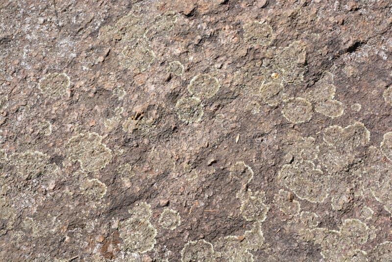 Lav på stenen arkivfoton