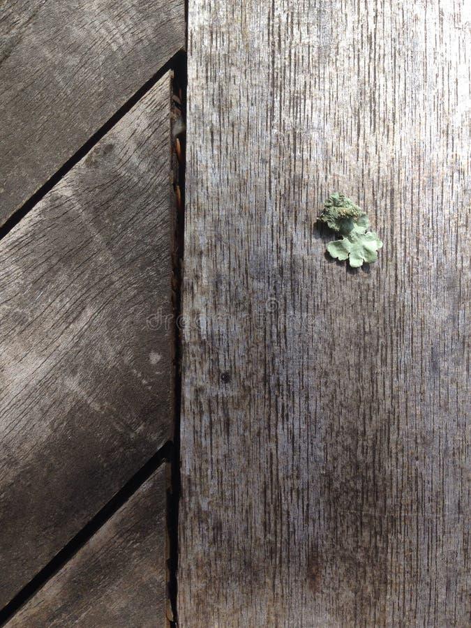 Lav på trä arkivbilder