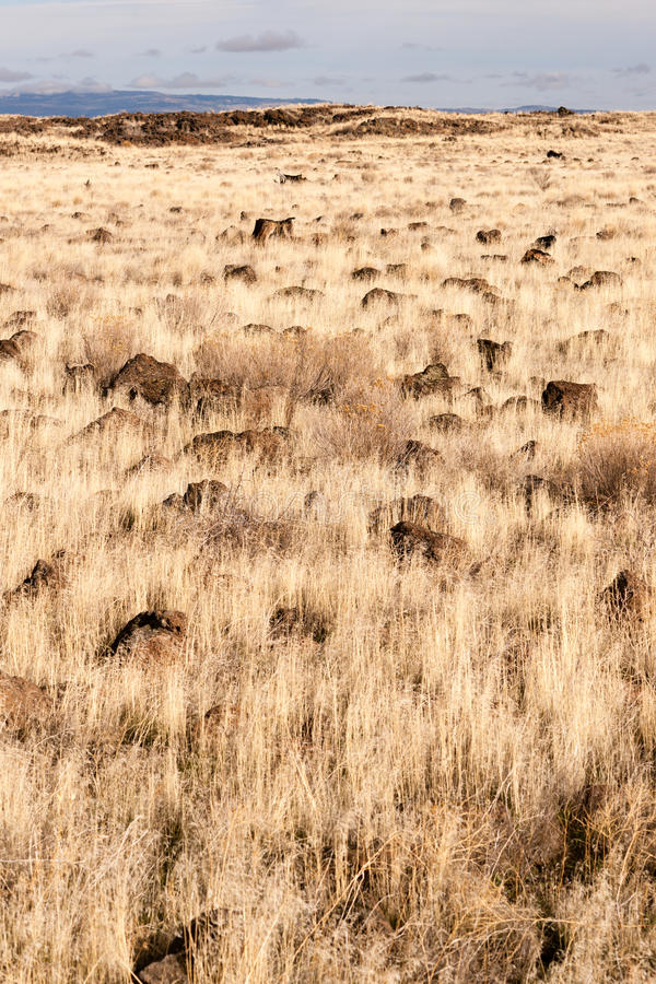 Free Lava Beds National Monument Rock Mounds Grassland Northern CA Royalty Free Stock Images - 47681919