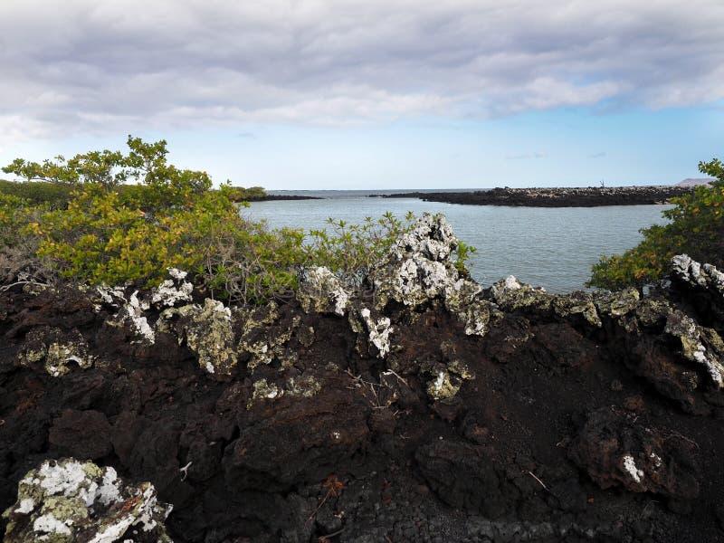 A lava enchida na ilha Islote Tintoreras comemora a alunagem, Galápagos, Equador foto de stock