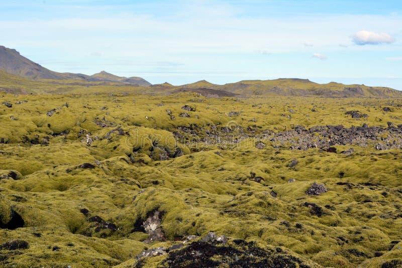Lava endurecida cubierta con el musgo en Islandia imágenes de archivo libres de regalías