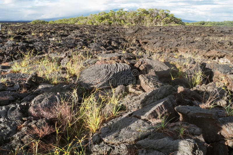Lava field with ropy pahoehoe on Isabela. Ecuador royalty free stock photos