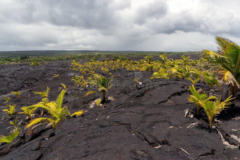Lava Field sur la grande île d'Hawaï images libres de droits