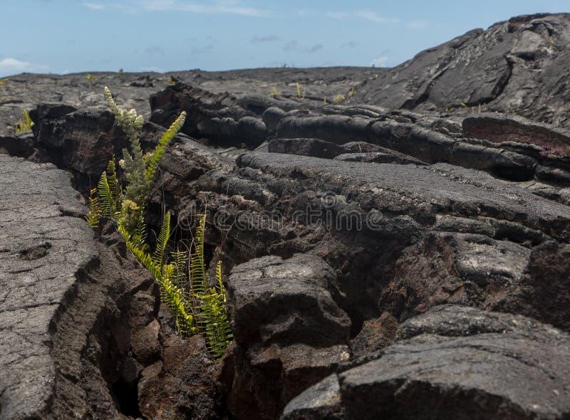 Lava Field sur la grande île d'Hawaï photos libres de droits