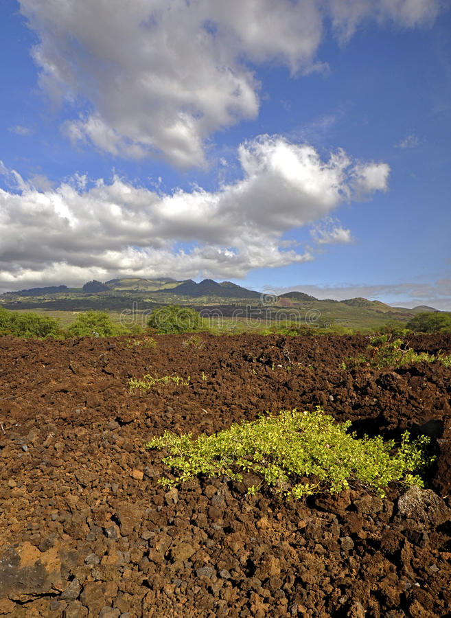 Download Lava Fields Of Maui Stock Image - Image: 12519591