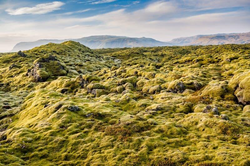 Lava Fields muscoso vicino a Vik in Islanda immagini stock libere da diritti