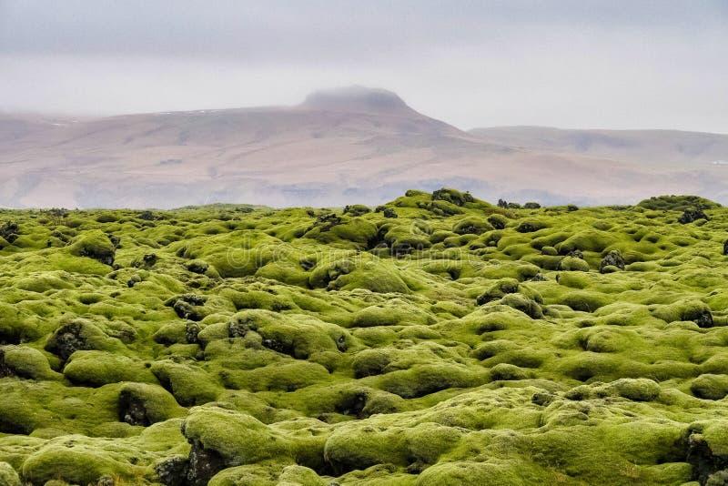 Lava Fields muscoso vicino a Vik in Islanda fotografia stock libera da diritti