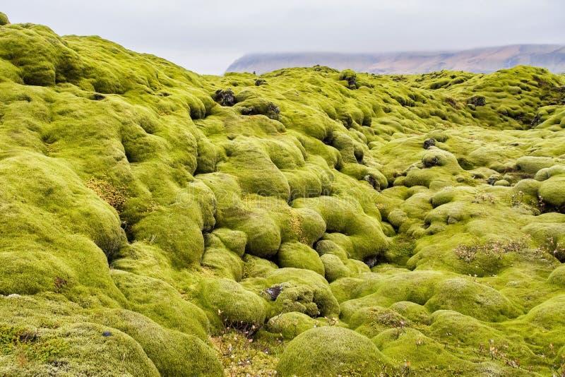 Lava Fields muscoso vicino a Vik in Islanda fotografie stock libere da diritti
