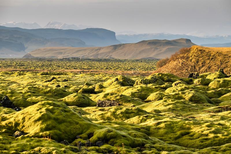 Lava Fields muscoso vicino a Vik in Islanda fotografia stock