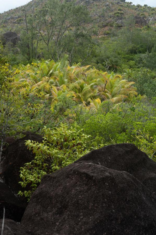 Lava stone formation into the bush in the natural park of curieuse island, Seychelles royalty free stock image