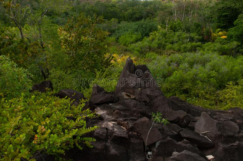Lava stone formation into the bush in the natural park of curieuse island, Seychelles stock photo