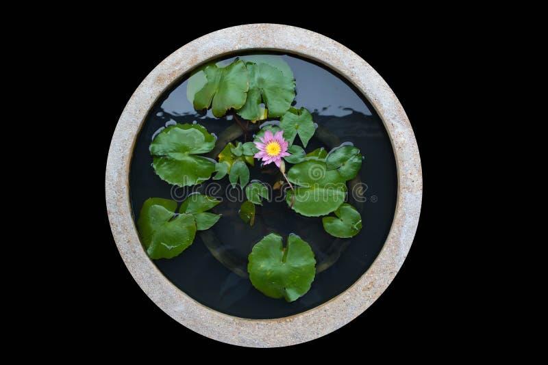 Lavabo de la flor aislado foto de archivo libre de regalías