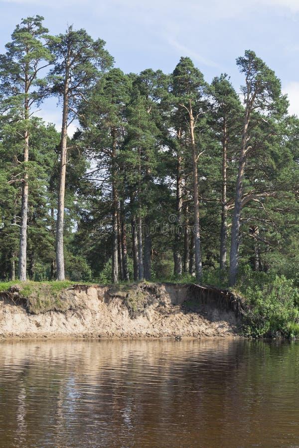 Lavado encima del banco de los nervios vagos del río cerca del grov de Pesterevskaya fotografía de archivo