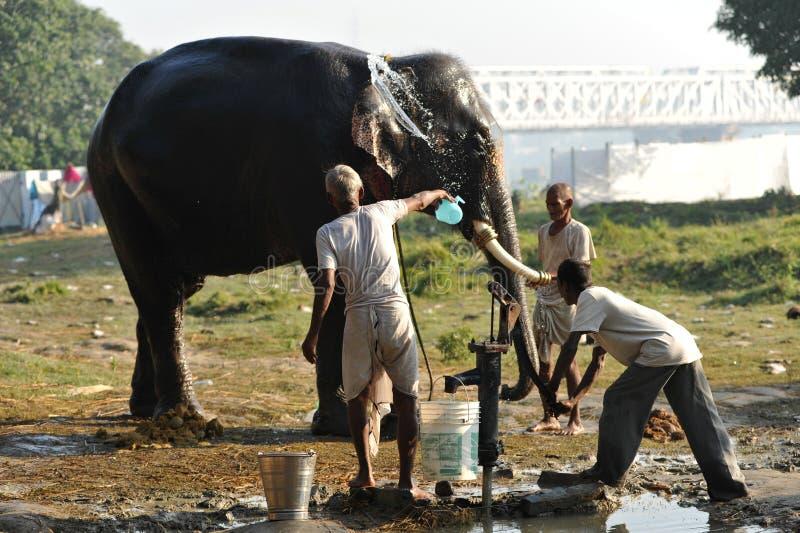 Lavage de l'éléphant photo libre de droits