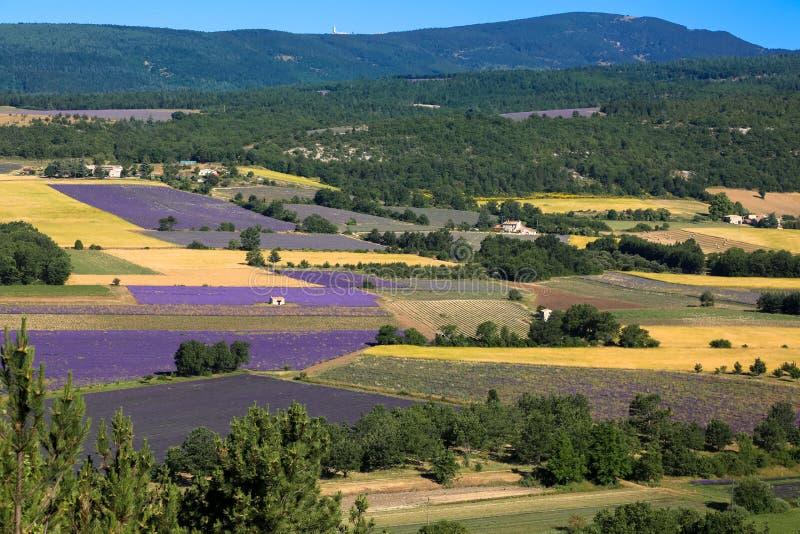Lavanda e campi di grano in estate, in una giornata di sole in Francia fotografia stock libera da diritti