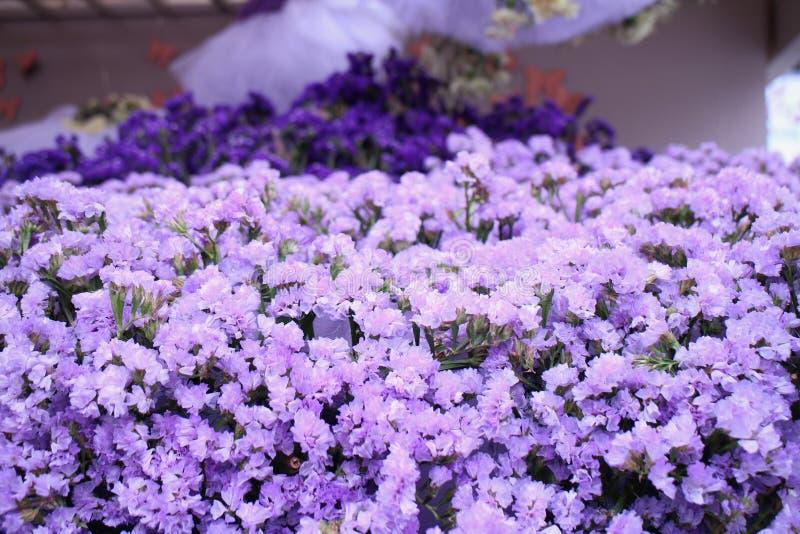 Lavanda púrpura magnífica imagenes de archivo